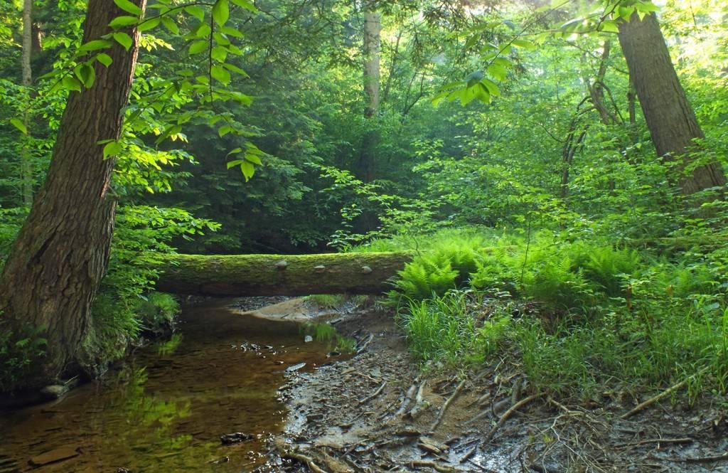 Las lasowi nierówny.