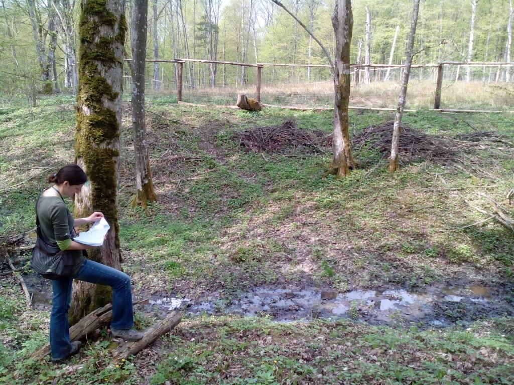 Ocena wpływu gospodarki leśnej na stanowiska Lobaria pulmonaria