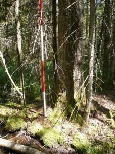 Prace gospodarcze przewidziane do zrealizowania w siedlisku skrajnie rzadkim i ginącym High Conservation Value Forests 3.1