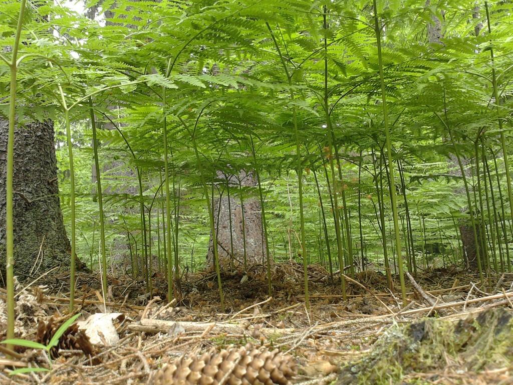 Forest Stewardship Council zamknęła polskie biuro FSC.