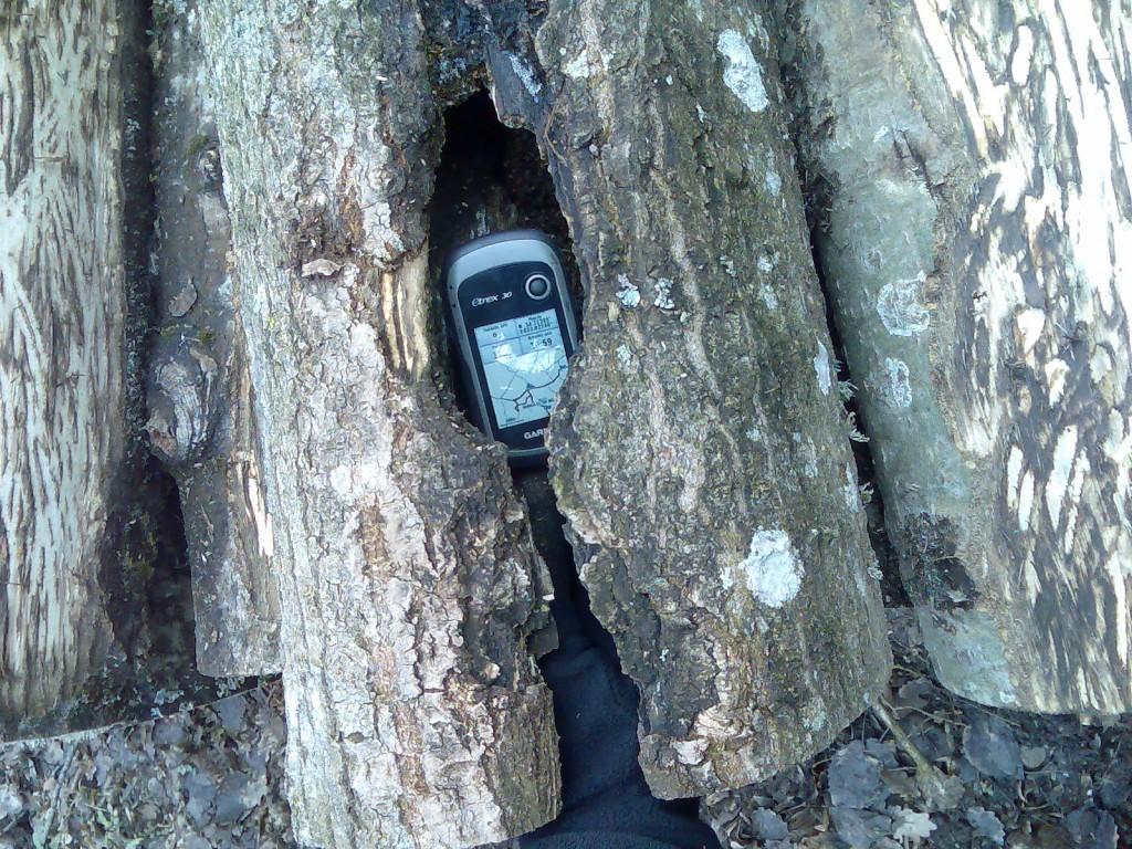 Dziupla w ściętym grabie, złożonym w stosie przy drodze leśnej. Złamane kryterium 6.3.6 oraz 6.3.7. Krajowego standardu gospodarki leśnej FSC w Polsce.