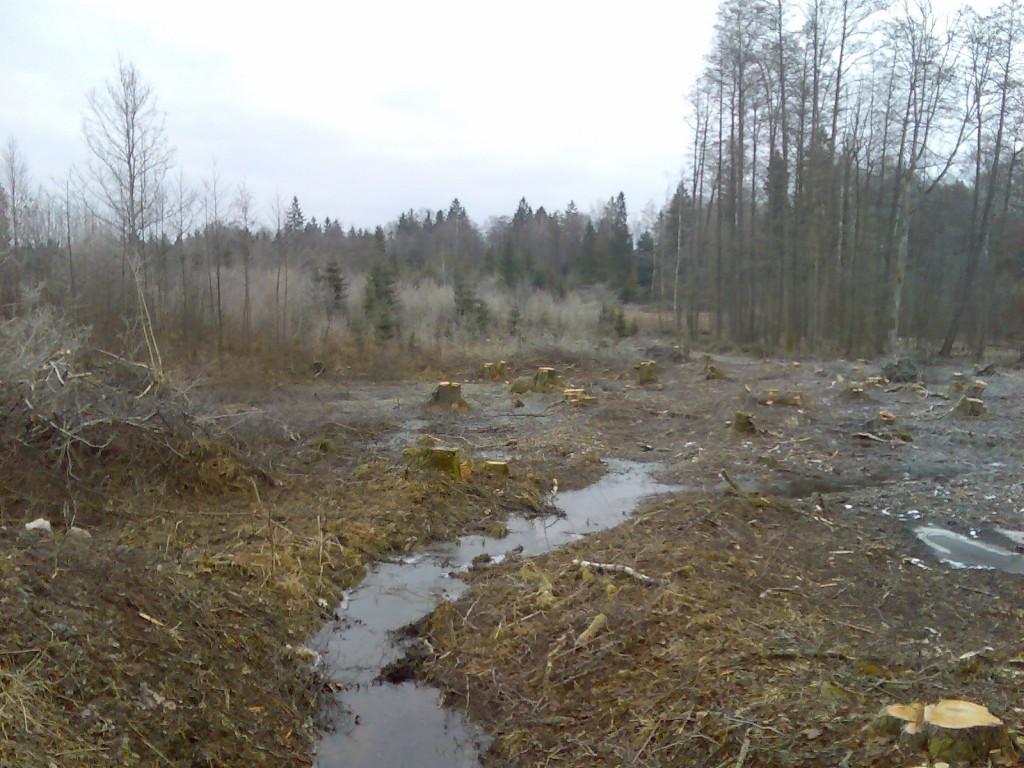 Zniszczony biotop dzięcioła białogrzbietego Dendrocopos leucotos. Udokumentowane przez RDOŚ w Olsztynie stanowisko wymierającego w Puszczy Boreckiej gatunku. Dnia 9.04.2015r. stwierdzono tutaj obecność jednego dzięcioła dużego oraz gatunku będącego przedmiotem ochrony obszaru Natura 2000 OSOP Puszcza Borecka- dzięcioła średniego. Dnia 20.04.2015r. stwierdzono tutaj obecność kilku drzew dziuplastych- olsza i brzoza, 2 dzięcioły duże donoszące pokarm do dziupli. Złamane kryterium 6.5.3. Krajowego standardu gospodarki leśnej FSC w Polsce. (Materiały dowodowe w załącznikach).